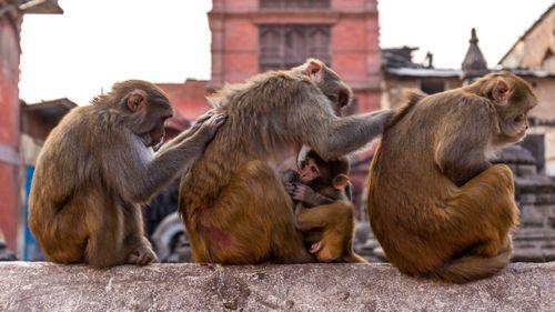 TEAMWORK Monkeys,taking,care,of,each,other.