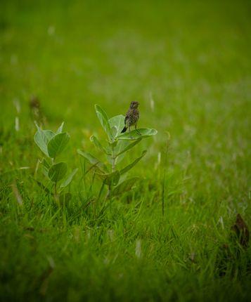 Bird,Resting,On,Leaf.