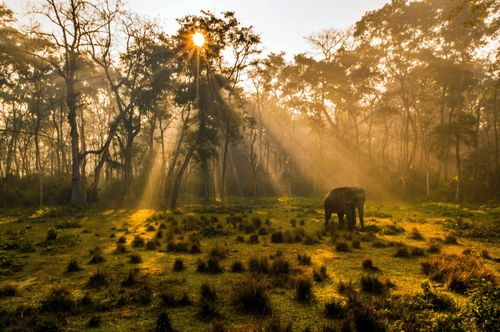 elephant,takes,misty,morning,walk