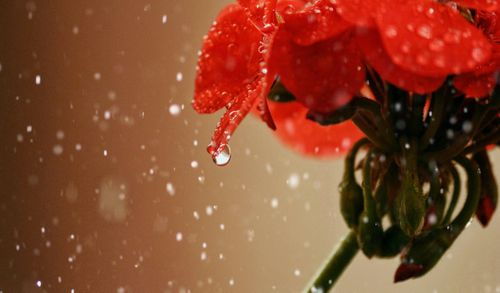 photo,macro,photography,flower,edited,snaseed,lens,distortion