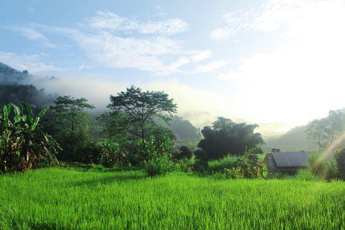 green,rice,field,modern,solar,system