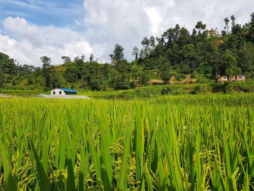 greenary,sankhu,area