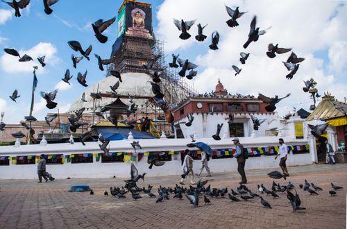 photo,unesco,world,heritage,site,boudhanath,stupa,made,base,mandala,symbol,peace,prosperity,co-incidence,picture,greeted,flock,pigeons
