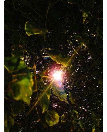 rays,hope