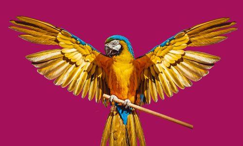 parrot,image,ready,kind,design