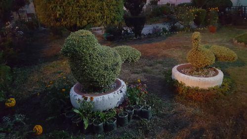 trees,birds,shape