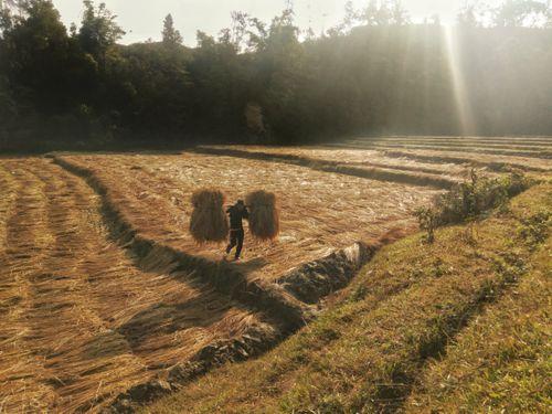 farmer,working,cold,days,sun,rising