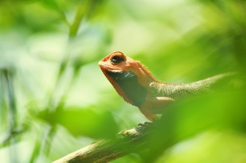 gecko,pokhara,poses,front,lens