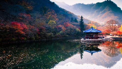 reflection,autumn,colors,photo,naejangsan,national,park,south,korea