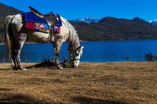 image,horse,grazing,shore,beautiful,rara,lake