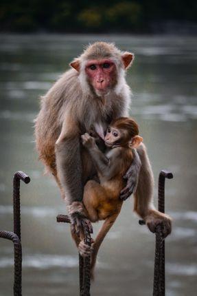 mother,love,feeling