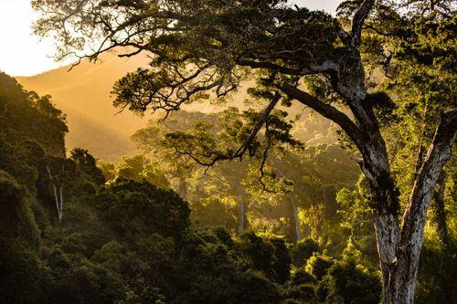 sun,rises,east,strength,nature