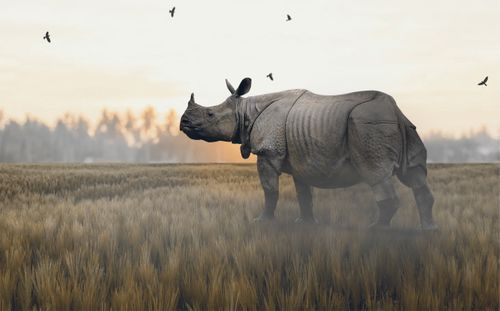high,definition,picture,one-horned,rhino