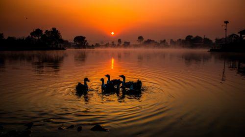 sunrise,playing,duck,taudah,lake,kathmandu,nepal