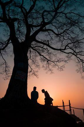 view,sunrise,form,single,tree