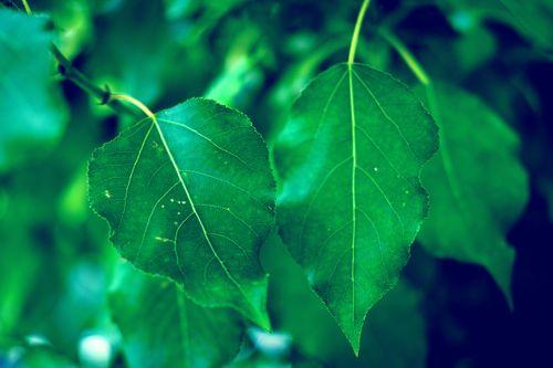 green,leaves,rainy,season