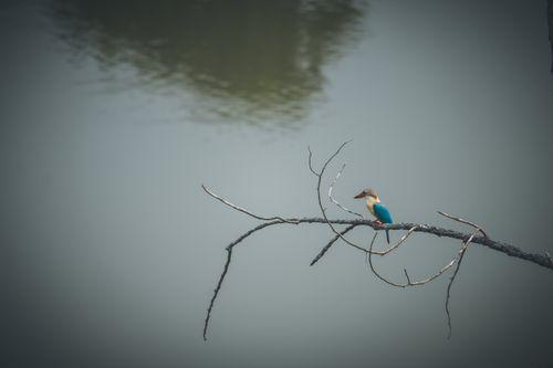 blue,feathered,bird,sitting,branch,tree