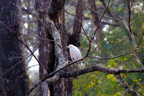 bird,sitting,tree,weak,fly