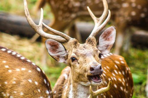 deer,photo