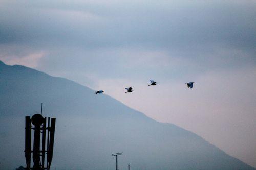 birds,flying,back,home,evening,time