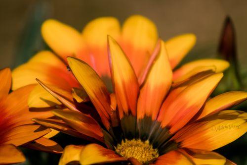 thousand,species,flower,found,godawari,botanical,garden