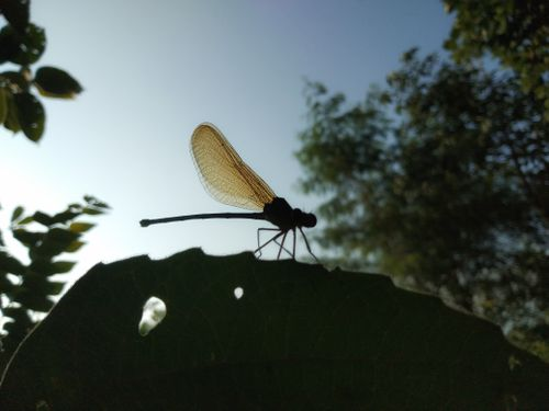 dragonfly,flying,insects,order,odonata,species,adult,dragonflies,characterized,large,multifaceted,eyes,pairs,strong,transparent,wings,coloured,patches,elongated,body
