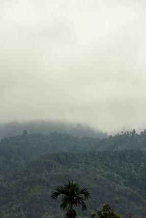 hills,tress,cold,wind