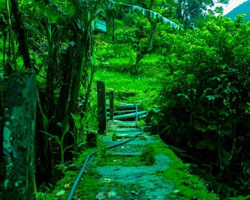 path,ghandruk