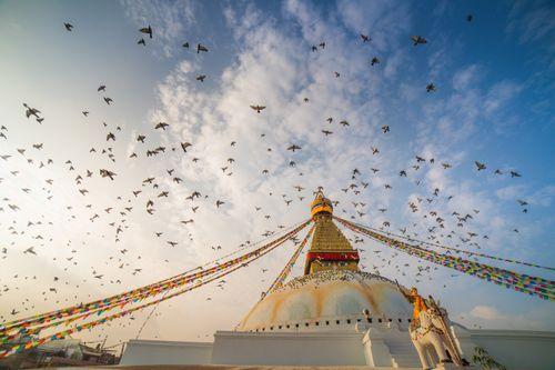 group,pegions,fly,boudhanath,stupa,buddhist,temple,kathmandu,nepal