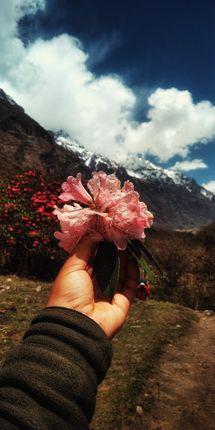 national,flower,nepal🇳🇵