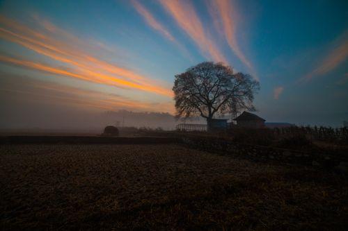 beautiful,sunrise,rice,field,khokana