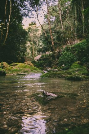 clear,water,stream,nature