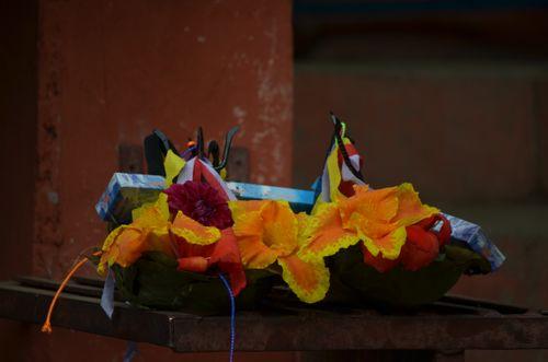 focused,flower,temple,nepal