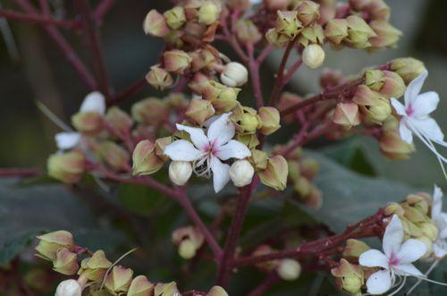 flower,located,palpa,scenic,view,nepal