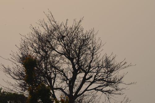 naked,tree,scenic,view,palpa,nelnepal