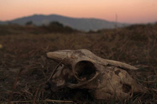 rapid,deforestation,environment,change,caused,species,animals,plants,extinct,picture,shows,skull,animal,victim,climate