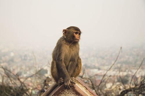 brown,baby,monkey,sitting,enjoying