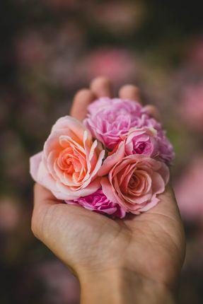 rose,hand,idea,photo