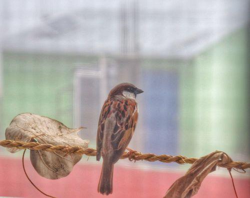 bird,window