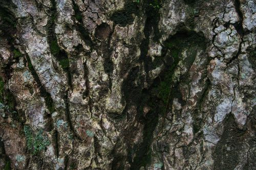 texture,bark,tree