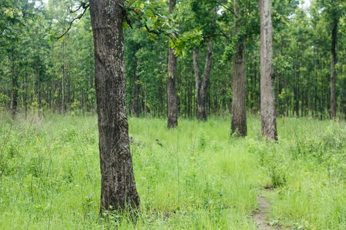 beautiful,forest,chitwan,national,park,nepal
