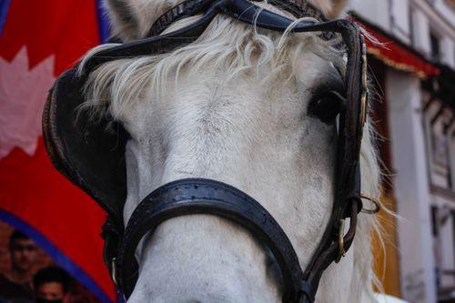 close,portrait,horse,indra,jatra,festival,kathmandu,nepal