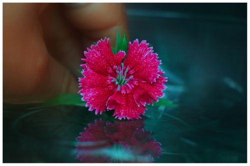 flower,reflection,photography#,sms,photography