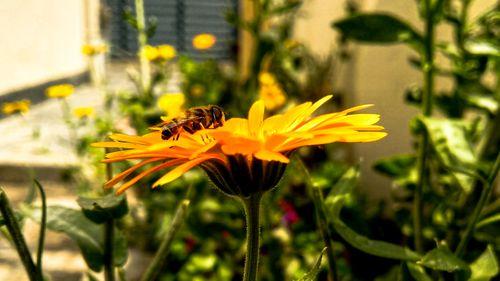 bee,resting,flower