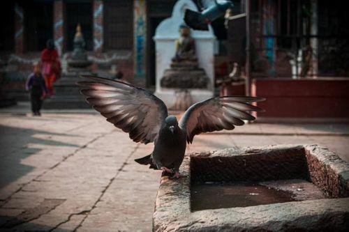 bird😍,wings