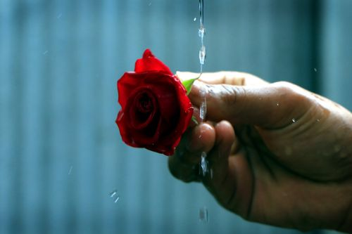 flower,splash,photography#,sms,photography