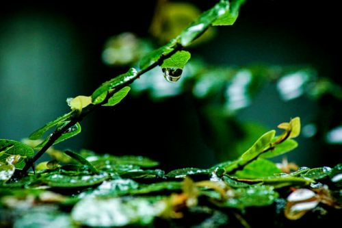 water,droplet,fall,leaf,beautiful,😍