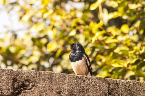 beautiful,bird,is😍