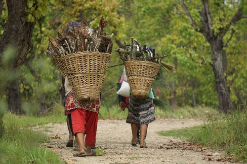 local,villagers,headi,home,collecting,firewood