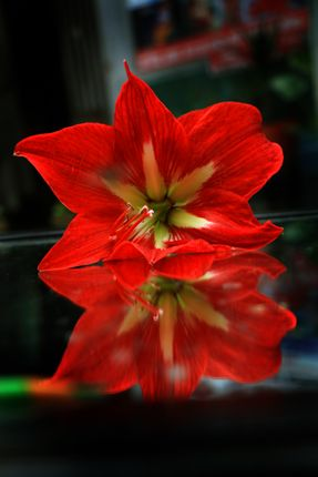flower#,reflectionon,mirror,sms,photography